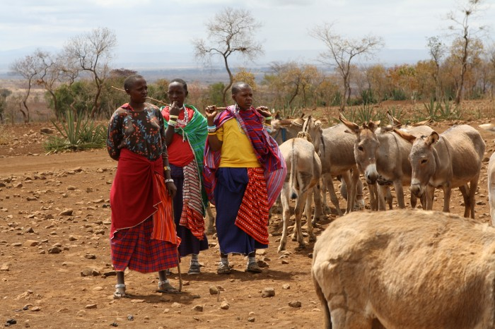 Bringing veterinary care to remote regions of the world