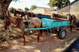 Equine Welfare Program, Nicaragua