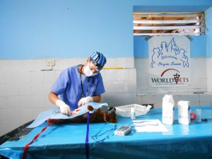 World Vets Cusco Peru