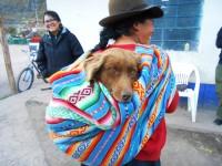 World Vets Peru Project