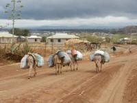 Arusha Donkey Project