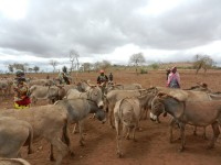 Arusha Donkey Project/World Vets