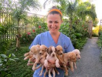 Volunteer holding puppies