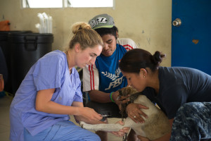 Dr. Abbey O'Connor, a World Vets volunteer veterinarian, and Lt. Hannah Castillo, prepare a young dog for desexing as part of the free clinic that was held for locals