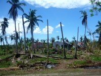 Farm in Daanbantayan  (Northern Cebu) damaged by the Typhoon.