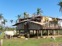 Rural farm in Daanbantayan, Northern Cebu with goat shed damaged in the Typhoon.