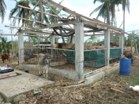 Government Farm in Daanbantayan, in Barangay Tambungon, that was heavily damaged by the typhoon.