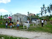 Owners wait to have their livestock and dogs treated at the first of three clinic field sites in Dapdap, Daanbantayan