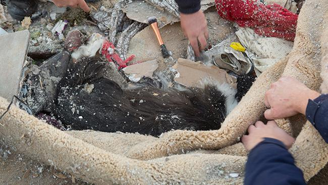 AFTER 30 HOURS, MAGGIE WAS FOUND IN THE RUBBLE.   IMAGE: CHARLES LEDFORD/UNIVERSITY OF ILLINOIS/WEATHER.CO