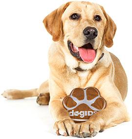 DogsIDSdog