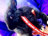 rabbitcollar