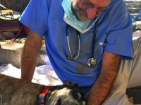 Dr. Mike Henes with Marley after surgery