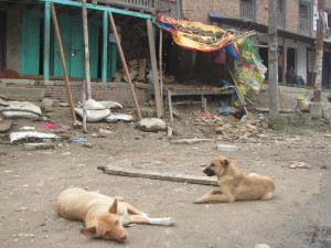 Dogs and Damaged Building 1