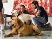 nepalresdog2