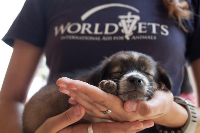 Seeking Veterinary Technician for Job Opening at World Vets