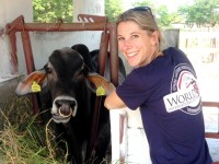 World Vets team leader, Dr. Ellie Milnes, with Jamaican Brahman bull