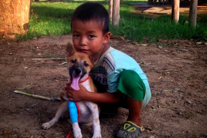 Volunteer Opportunity for Veterinarians in Thailand