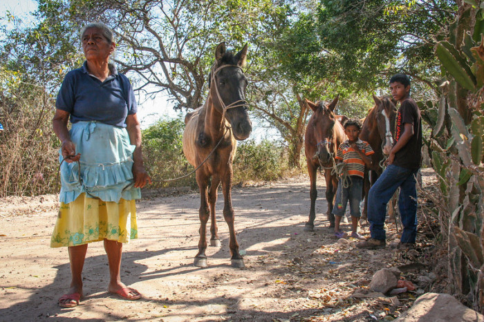 Help Working Horses! Volunteer on our Equine Welfare Project