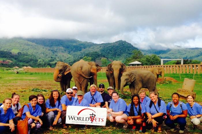 World Vets Thailand Elephant Experience