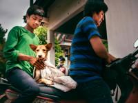 worldvets_2016_cambodia_11