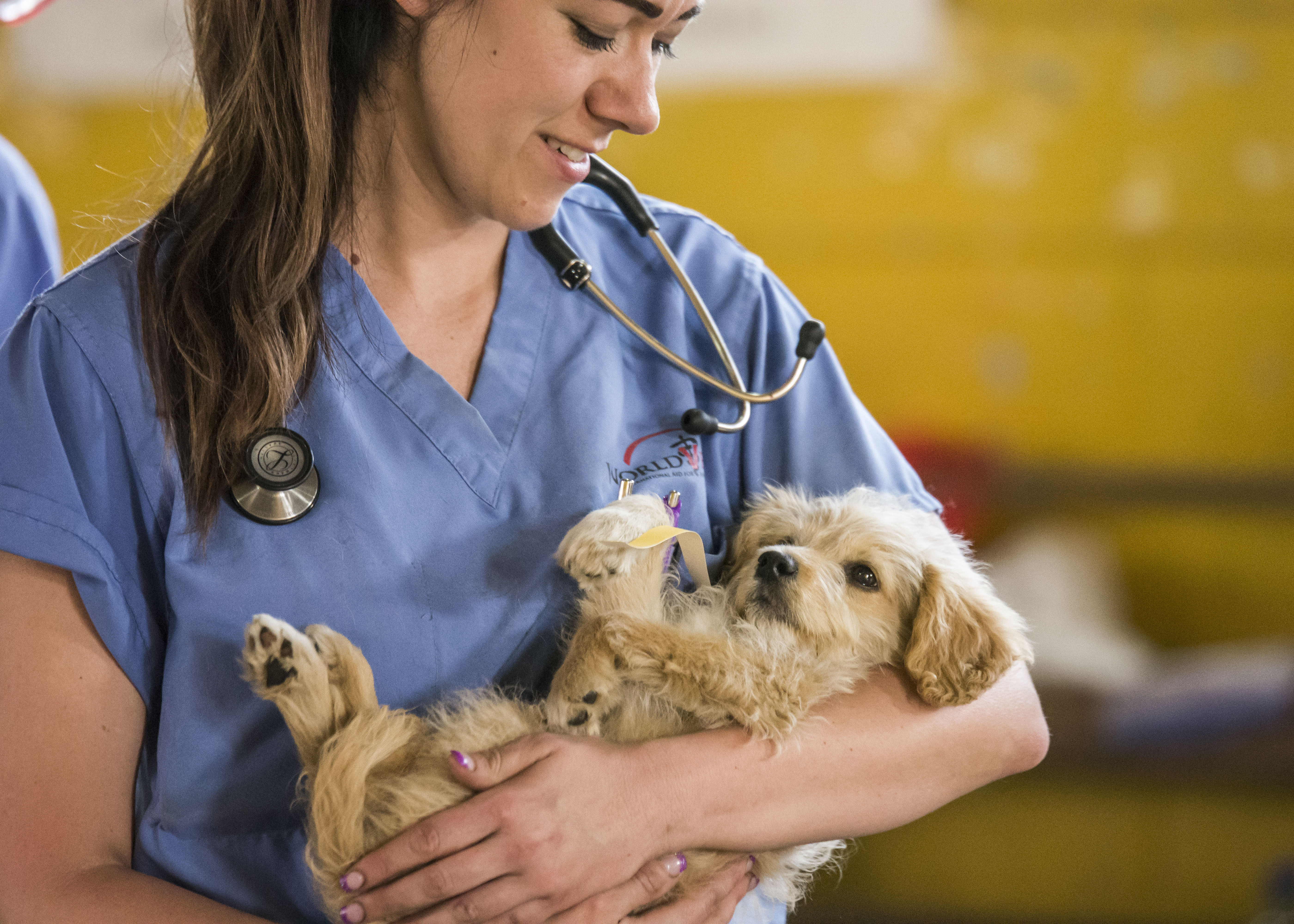 Veterinary Animal Doctor Stock Vector Image Art