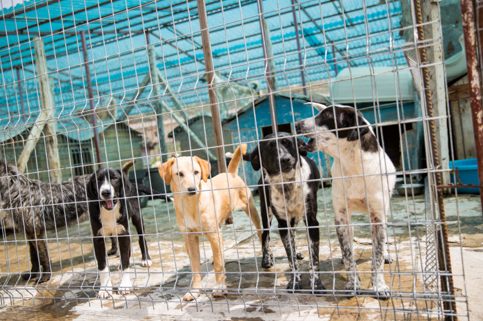 World Vets helps control street dog population in Albania
