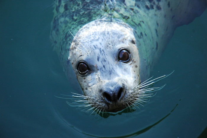 It's Seal Pup Season: Marine Mammals Need your Help!