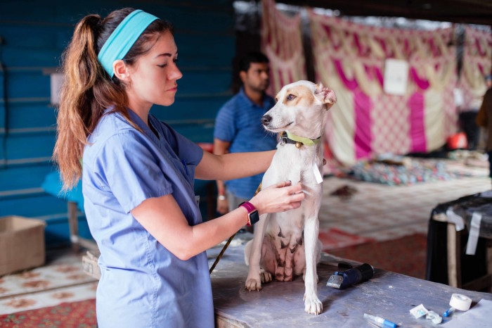 World Vets Operates Free Sterilization & Rabies Vaccination Campaign in India