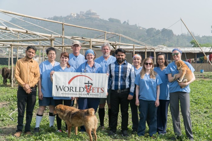 Thank you Team Nepal! Hundreds of Street Dogs Sterilized
